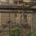 ...hinter Kohlsprossen sieht das Haus auch gut aus:) - im Garten ist genügend platz für Gemüse